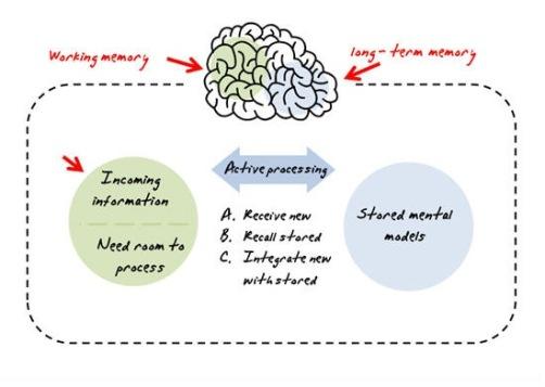 brain32