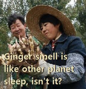 ginger_harvest